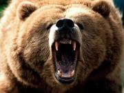 The Bearcast