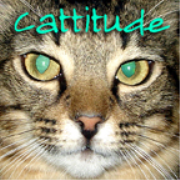 Cattitude -  Episode 0 Introduction - Welcome to Cattitude