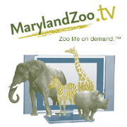 MarylandZoo.TV