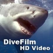 DiveFilm HD Video (HD)