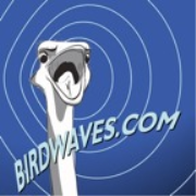 Birdwaves Media Presents: The ProgCast