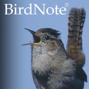 BirdNote Podcast RSS Feed